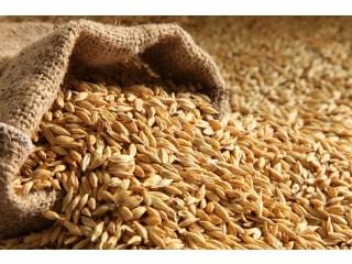 Срочно купим зерно нового урожая